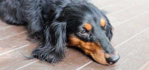 Megelőzhető-e a kutyáknál a rákos megbetegedés?